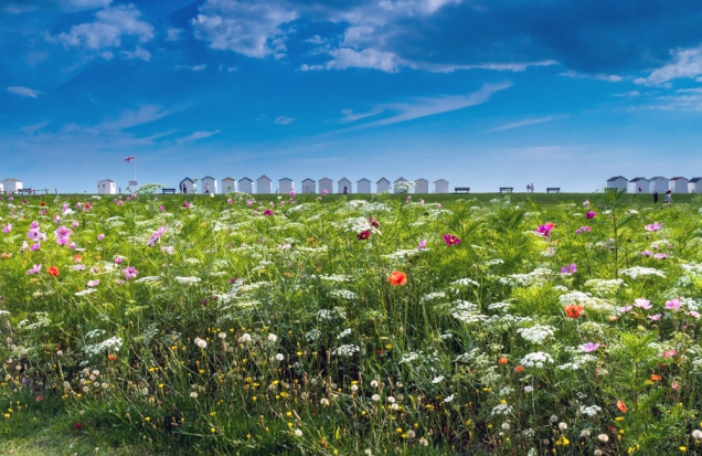 Wild Flowers and Beach Huts at Goring-by-Sea