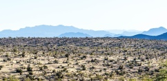 1004 Red Rock Canyon, Nevada