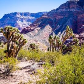 1017 Landscape near Mesquite