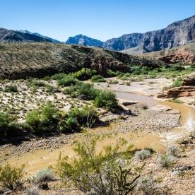 1018 The Virgin River near Mesquite