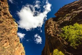 1023 Zion Utah Looking Up