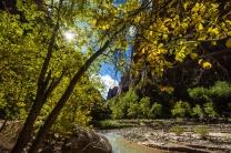 1029 Zion Utah Landscape