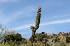 1054 Manky Cactus Arizona