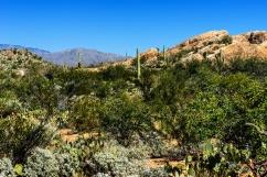 1056 Tuscon Area Arizona
