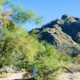 1057 N Southern Arizona Home and Landscape