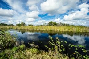 1069 Everglades Alligator Tamiami Trail