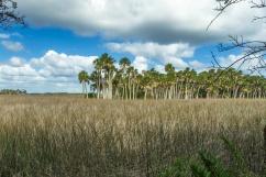 1071 Florida Landscape Weeki Watchi