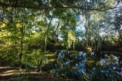 1073 Everglades Florida Landscape