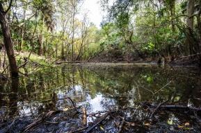 1080 An Alligator's View Florida