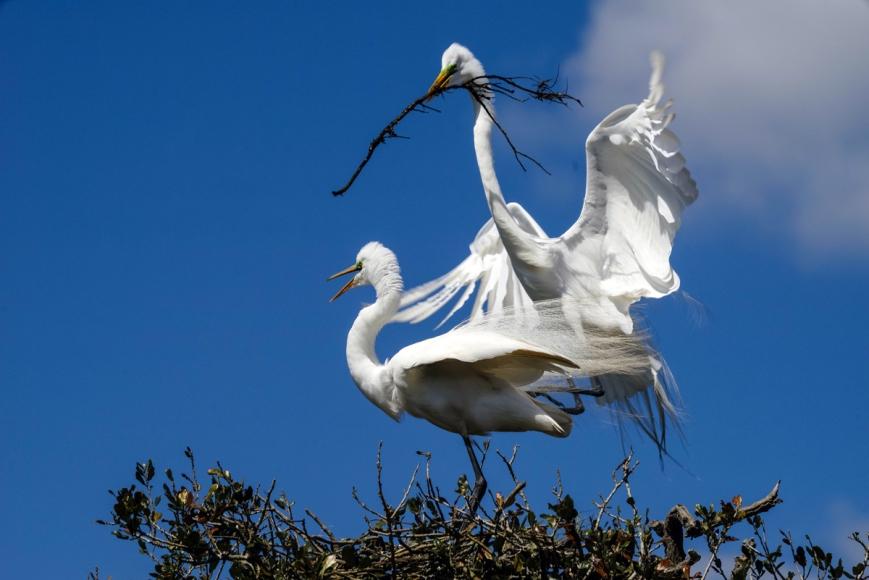 x Egrets 1