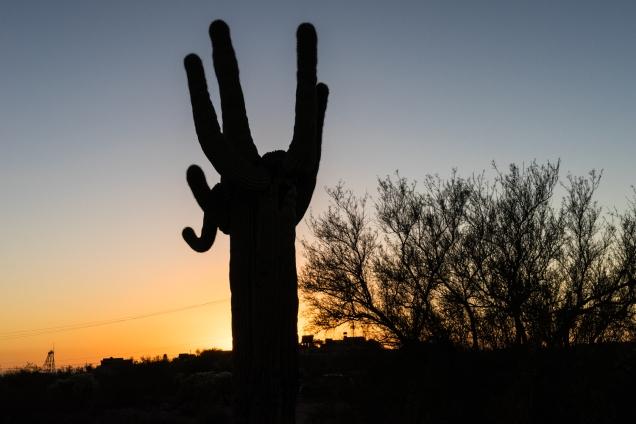 apache-junction-cactus-sunset-1500-_dsc3865jpg-3865