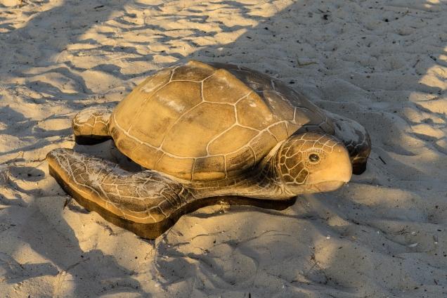 stone-turtle-1500-_dsc3902-jpg-3902