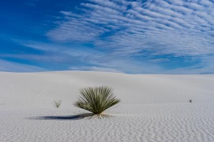 Wild Grasses in the Desert