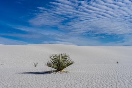 New Mexico - Wild Grasses in the Desert