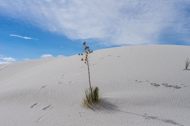 white-sands-2-1500-_dsc3527-jpg-3527