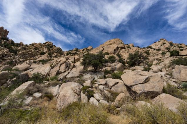 1500 Cochise Rest Area i10 4 061117 DSC07627.jpg-07627