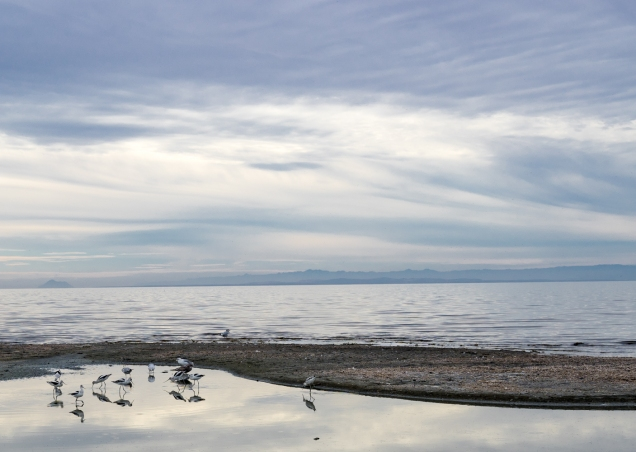 1500 Salton Sea at Bombay Beach _DSC07808-07808