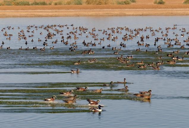 1500 Cibola Lake_DSF2992