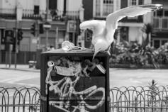 1500 Seagull grub BW_DSF3914.jpg (1 of 1)