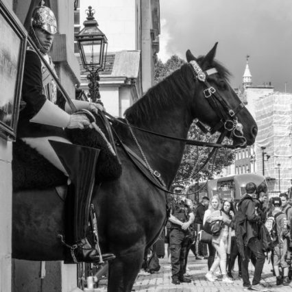 cropped-1800-horseguard-bw-3.jpg