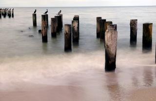 1800 Birds on Posts Naples 181118_DSF6744