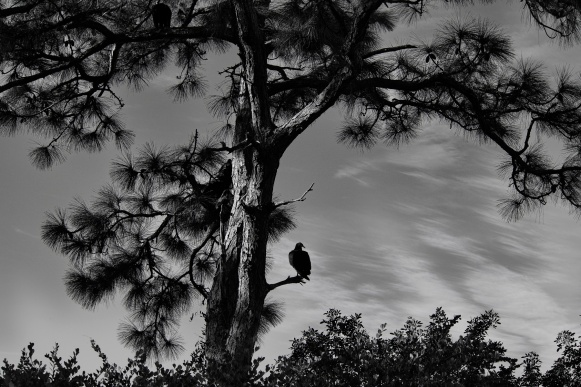 1800 Lonely Vulture 191118_DSF6768