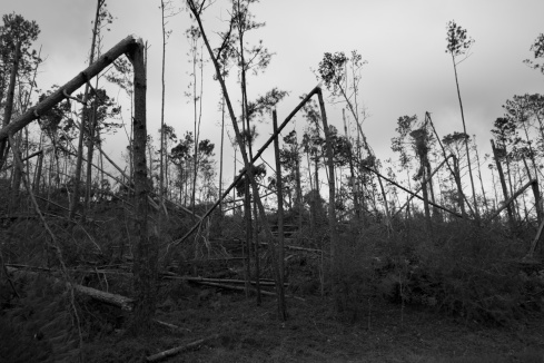 1800 Snapped trees Hurricane michael 151118_DSF6705