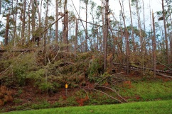 1800 Trees Down Hurricane Michael 151118_DSF6703