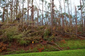 1800 Trees Down Hurricane Michael 151118_DSF6703