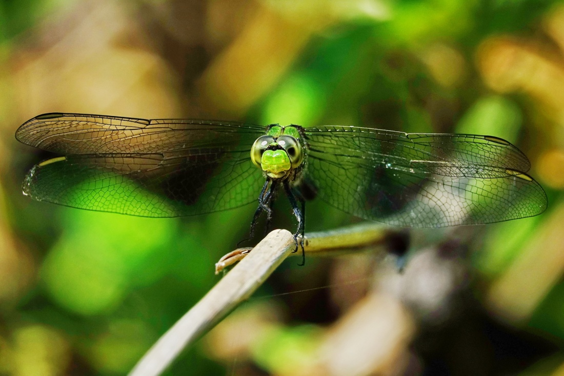 1800 Dragonfly at Sugden 120319 DSC00033