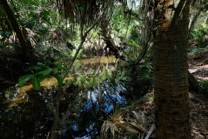1800 Jelks Creek 130319 DSC02784