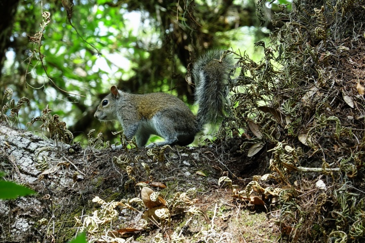 1800 Squirrel at Jelks 130319 DSC02782
