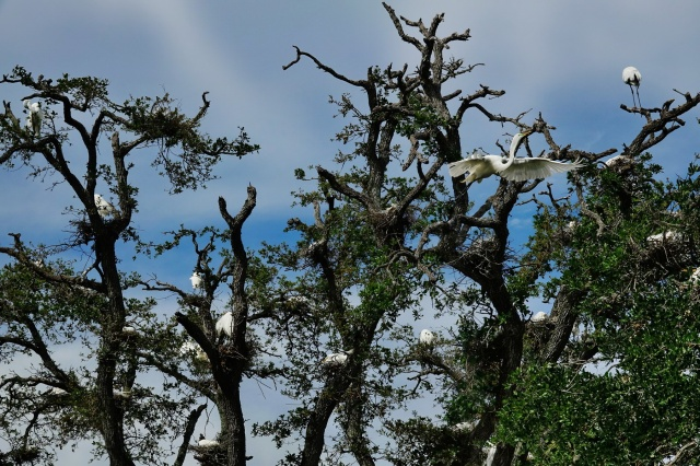 1800 The breeding tree 180319 DSC03140