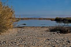 1800 Colorado River near Parker 220120_DSF1321