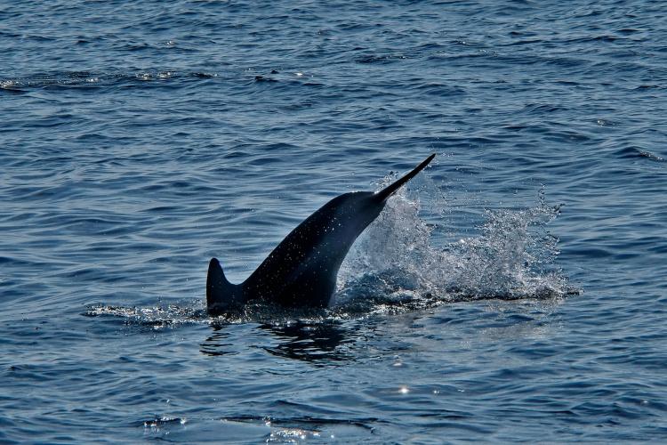 1800 Dolphin Dive 130120_DSF1009