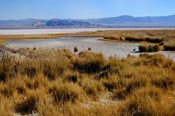 1800 Salt lake Baker Cali 130120_DSF0975