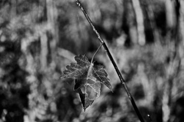 A rather badly chewed leaf....