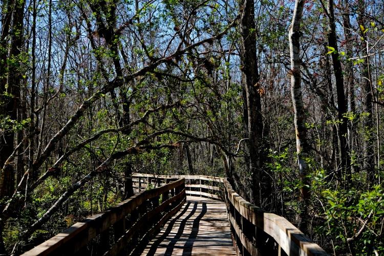 1800 Osceola Environmental Boardwalk 020220_DSF1681