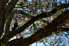 A squirrel busy collecting by Lake Toho